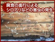 腐食の進行によるシロアリなどの害虫の発生